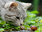 Cat and snails